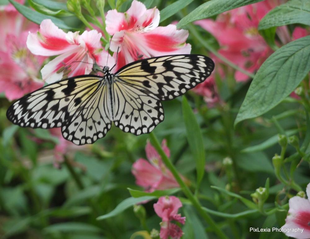 Butterflies (3/6)