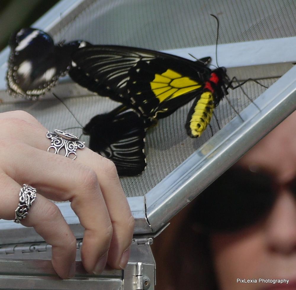 Butterflies (2/6)