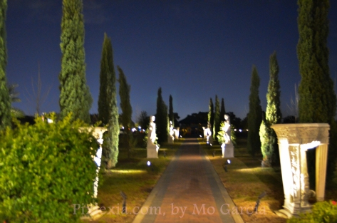 The front garden lit up at night