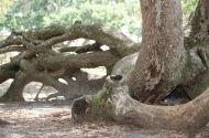 Cool Roots