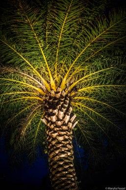 Palms in light